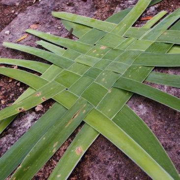 Tressage en nappe avec des feuilles d'iris vertes
