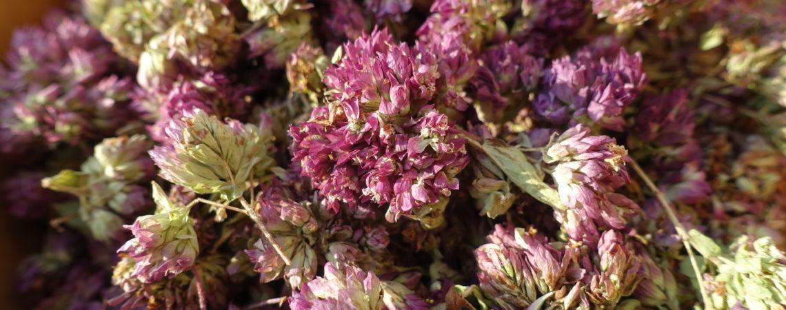 Fleurs séchées d'origan (Marjolaine sauvage)