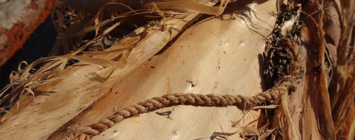 Fabrication d'une ficelle en fibres de liber de peuplier