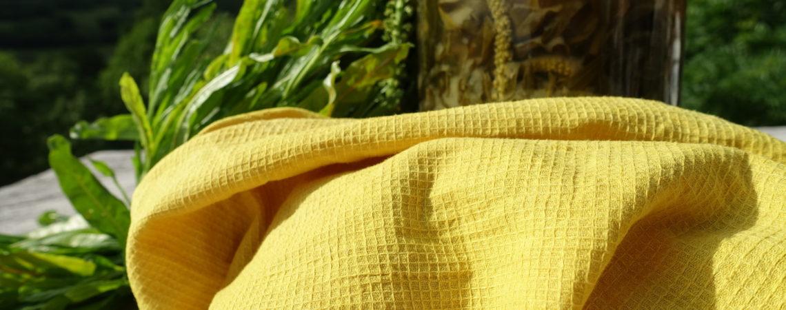 Tissu de coton teint en jaune vif devant un bain de teinture de réséda des teinturiers
