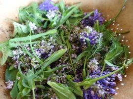 Mesclun de plantes sauvages : fleurs de thym et muscari à toupet, boutons de salsifis, silène et achilée