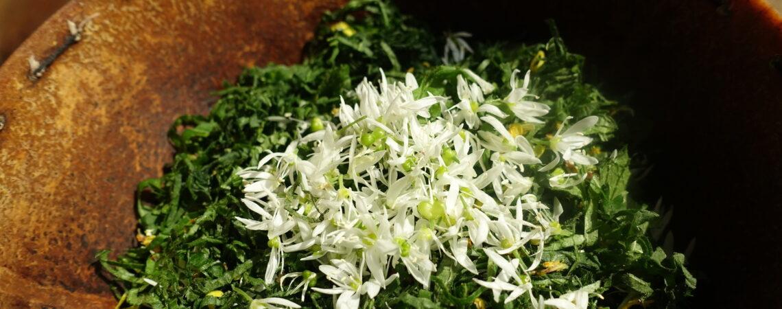 Salade de feuilles d'alliaire et de plantain à l'ail des ours